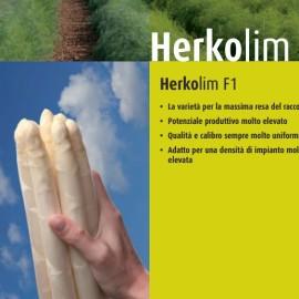 asparago hercolin agricolademarchi