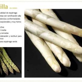 darzilla2-bianco e Verde